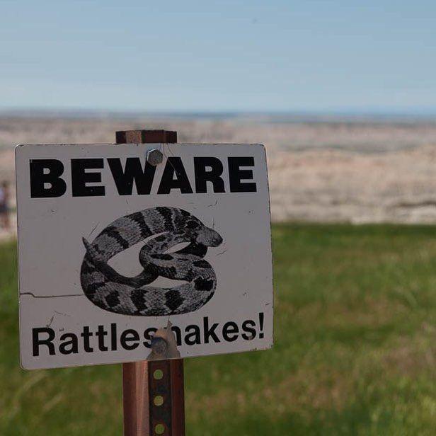 Tierische Einwohner des #badlandsnps #mycanusa #southdakota #usa #snakes