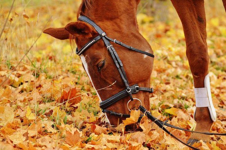 fotografia de um cavalo marrom comendo