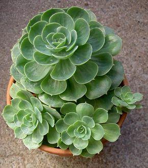 Diseña un jardín con plantas resistentes al sol y la falta de agua | Cactus