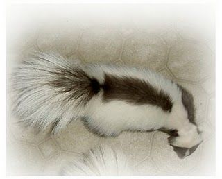 white skunks with black stripe | Skunk | Wolfnwings' Blog