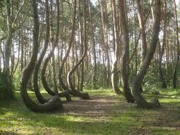 """Képtalálat a következőre: """"szép és különleges erdők"""""""