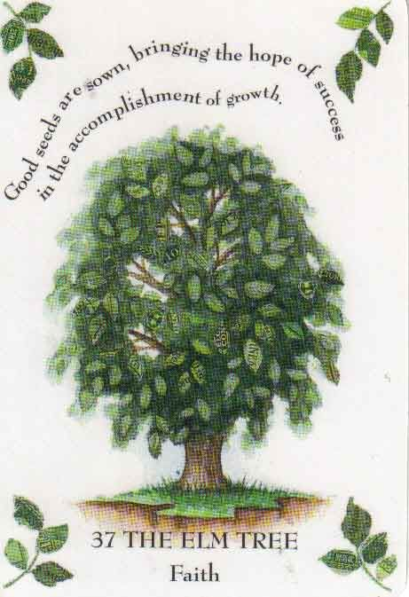 Elm: Because of its rich foliage and sap,  the Elm is sacred to Saturn, Roman god of agriculture. Representing fertility,  it foretells that your wish will meet with success. Its other meaning is their need to give way and let nature run its course,  to sacrifice what you have for what could be.