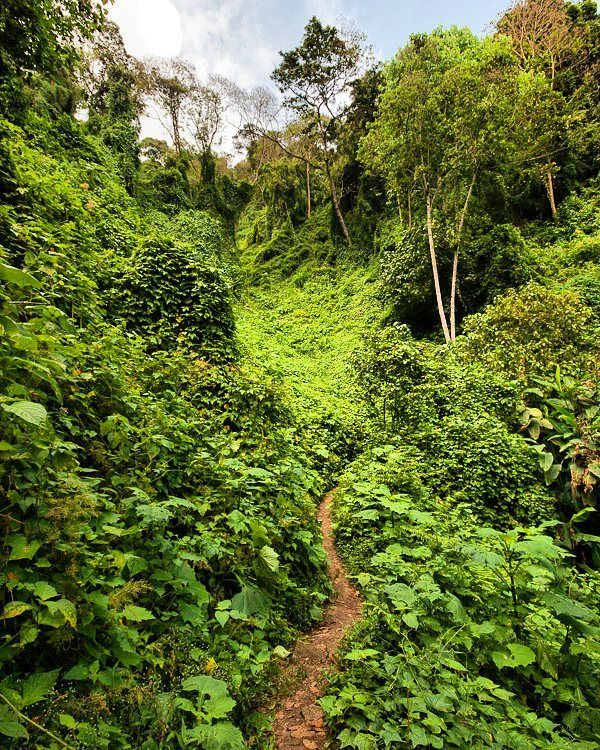 """Cada 26 de junio se celebra elDíaInternacional de la Preservación de losBosques Tropicalescon el objetivo de fomentar acciones sustentables y amigables con el ambiente.  Estedíafue establecido en 1999 por el programa de las Naciones Unidas para el Medio Ambiente la Unión Internacional para la Conservación de la Naturaleza y la Unesco.  Los bosques no son solo """"el lugar donde están los arbolitos y los animalitos"""" mucho más que """"monte y culebra"""". Los bosques tropicales nos brindan servicios…"""