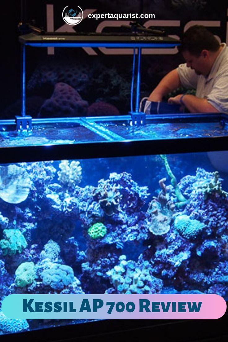 The Impact Of A Metal Halide T5 Combo Is Simulated By Kessil Ap700 Led Hybrid Optics Hybrid Optics Read This Art Reef Tank Planted Aquarium Fish Tank Plants
