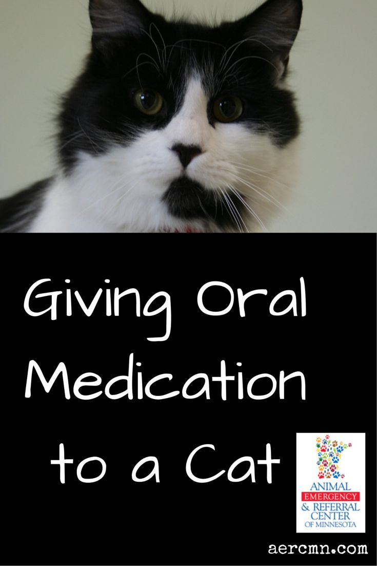 Giving oral medication to your cat isn't as easy as giving it to your dog! Find out more about how to get your cat to accept oral medications here: http://aercmn.com/blog/posts/giving-oral-medication-to-a-cat/ #cats #catlovers #healthypets #pethealth #AERC #twincitiesemergencyveterinarian #saintpaulanimalhospital #oakdaleemergencyvet
