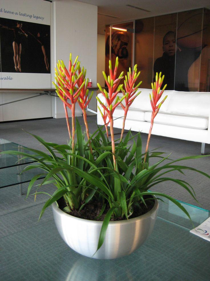 31 Best Dried Arrangements Images On Pinterest Flower