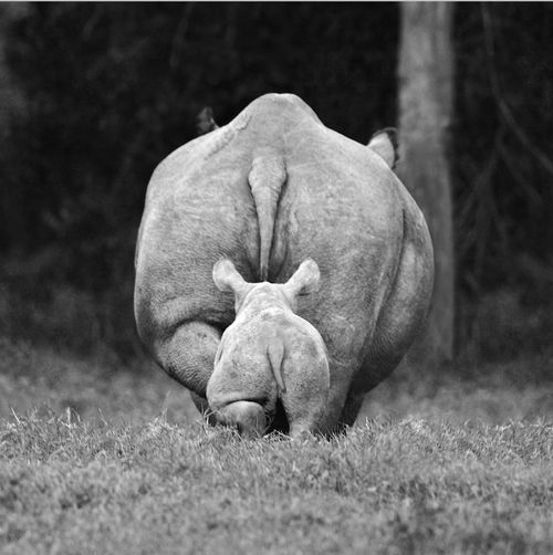 Rhino bums.                                        Lonely Coast on imgfave