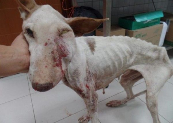 HELP !!! SIGN PLEASE : Justice for Santa, Spanish dog severely neglected by his owner : http://www.yousignanimals.org/Justice-for-Santa-Spanish-dog-severely-neglected-by-his-owner-t-578