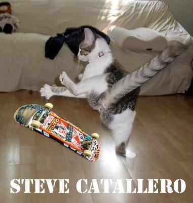 Skateboarding Cat!