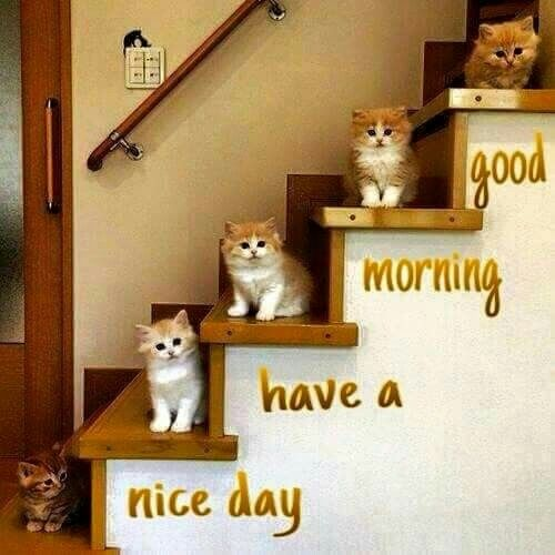 Today will be another awesome day 4u. Be ready, keep smiling, beautiful girl! :) as the world needs that. amazing day needs amazing person like you cheeky.