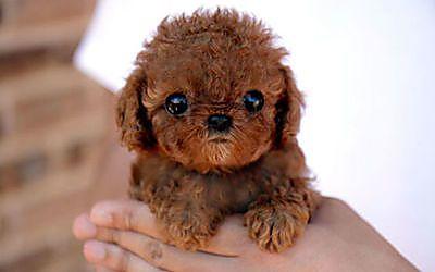 Le razze canine più belle al mondo (la numero 8 è adorabile)