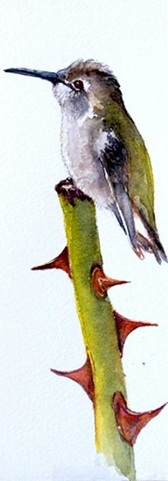 Costa's Juvenile by Ruth Glenn Little - Costa's Juvenile Painting -
