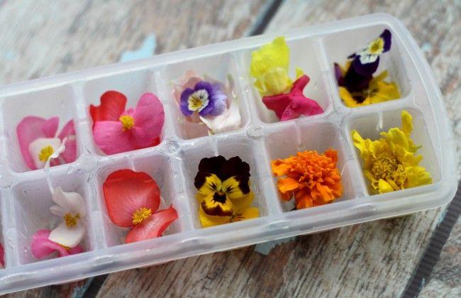 DIY: ijsblokjes met eetbare bloemen