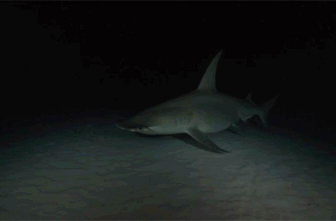 It's a Shark GIF-a-Palooza: Photos : Discovery News