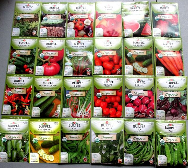 Burpee ORGANIC Seeds  (  Vegetable )    24 NEW Packets Packaged for 2015   $$$
