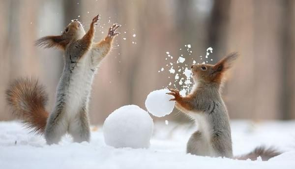 The secret lives of squirrels: oak.ctx.ly/r/2jt5c