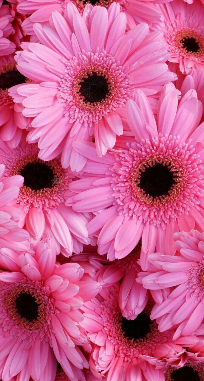Imagen sobre Fondo de pantalla flor rosa de Narda Cruz en