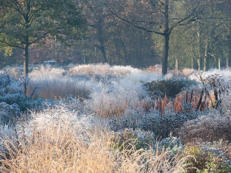 112 best winter garden images on pinterest landscaping for Landscapes in landscapes piet oudolf