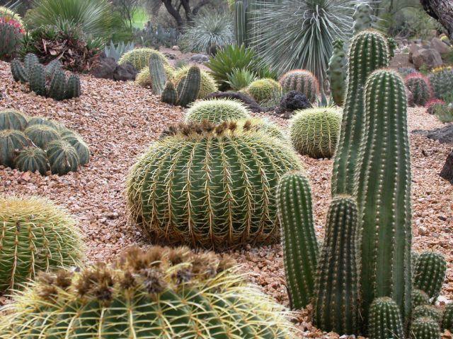 high desert front yard landscaping
