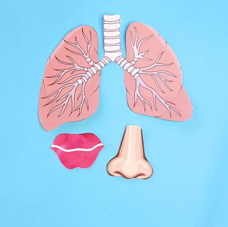 hello, Wonderful - HOW TO MAKE A LUNG MODEL WITH KIDS