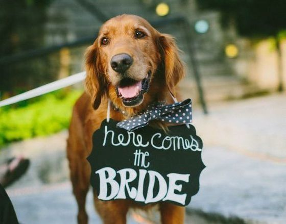 14 Wedding Signs For Dogs That Are Just Plain Paw-some