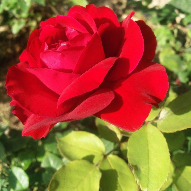 Kırmızı güzellik