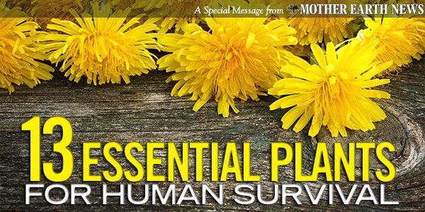 13 Essential Plants for Human Survival