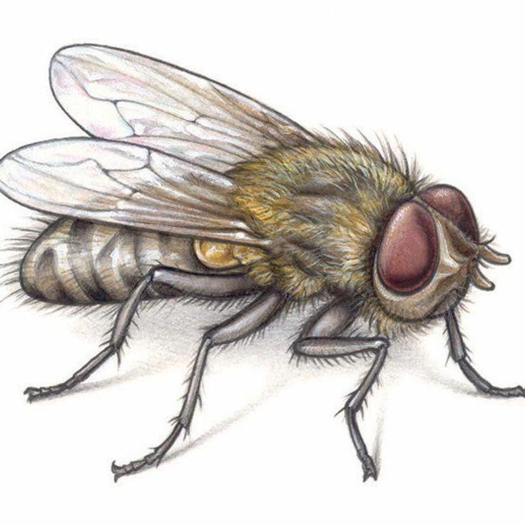 Flies rid how to get rid of flies the family handyman