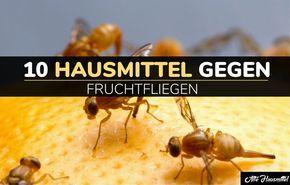 10 Hausmittel gegen Fruchtfliegen