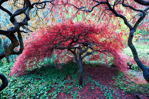 trees with blooms - Google Search