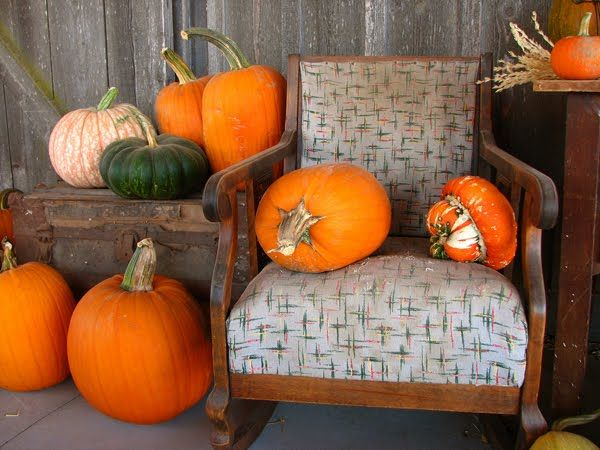 149 best images about gardening ideas on pinterest for Best pumpkins to grow