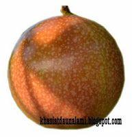 khasiat buah markisa khusus dibudang kesehatan sangat banyak sekali, kandungan yang terkandung didalamnya diyakini dapat mengobati berbagai jenis penyakit