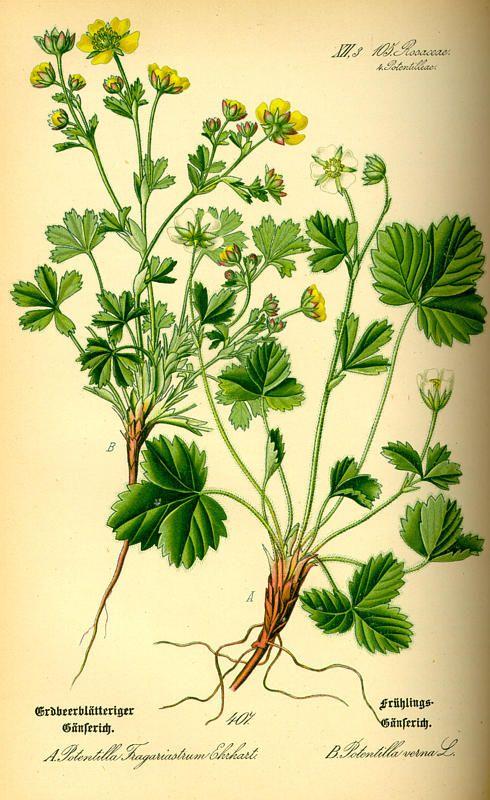 flora von deutschland