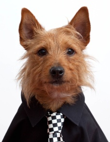 Gallery: Portraits of dogs dressed up – 30 January 2013 | Metro UK
