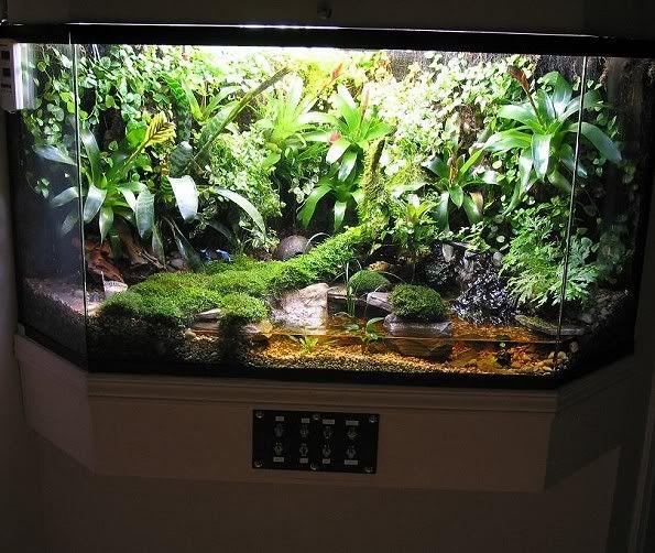 Best 25 Frog Terrarium Ideas Only On Pinterest Tree