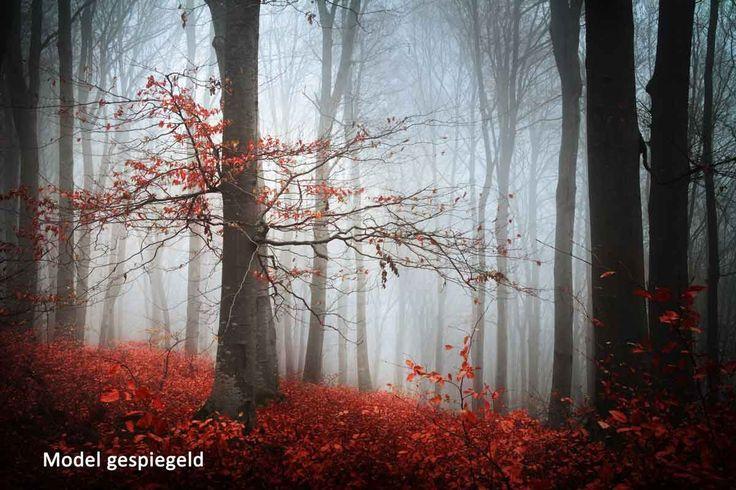 Vlies fotobehang Mistige herfstdag in het bos - Bomen behang | Muurmode.nl