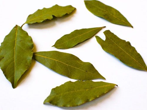 1) stay away from using fresh bay leaves 2) freshly dried bay leaves will last for years in the freezer