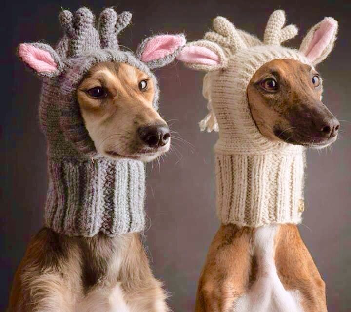 111 Best Animals Keeping Warm Images On Pinterest