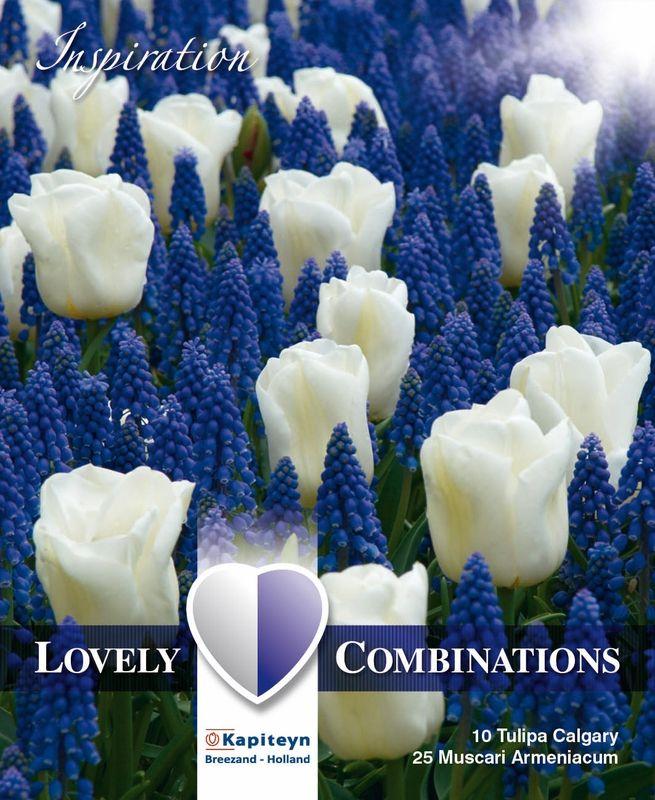 Kukkasipulilajitelma Lovely tulppaani ja helmililja 35 kpl/pkt (91653280) | Kauppila Oy