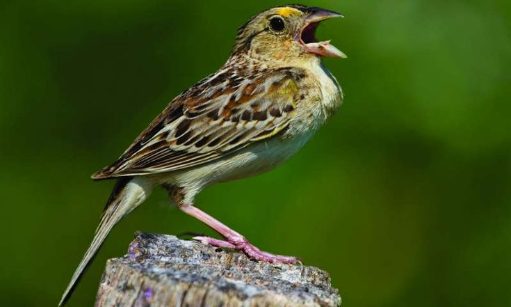 Extinction looms for two rare bird species after devastating hurricanes