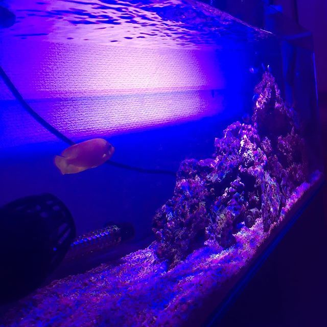 【omisuke180】さんのInstagramをピンしています。 《. 連投ごめんなさい🙇 暇なんです、、、笑 #fishtank #tropicalfish #aquarium #アクアリウム #海水水槽 #海水魚 #90cm水槽》