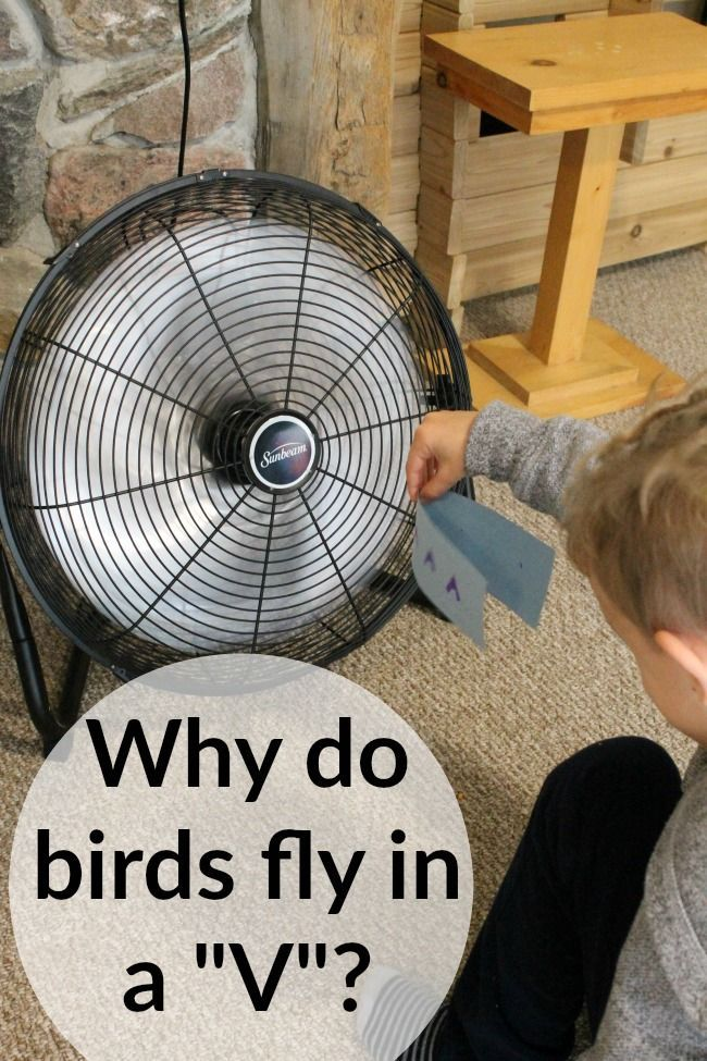 "A great science experiment for kids! Why do birds migrate in the shape of a ""v""? A great lesson on wind resistance!"