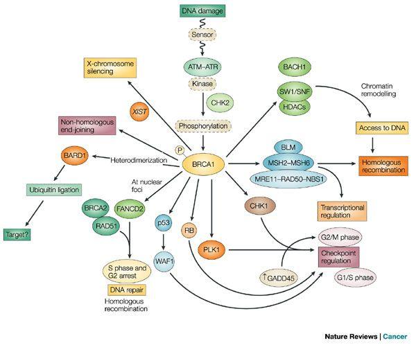 Definition Of Gene Pool In Biology - definitoin