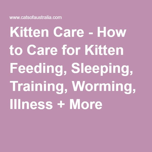 Kitten Care - How to Care for Kitten Feeding, Sleeping, Training, Worming, Illness + More