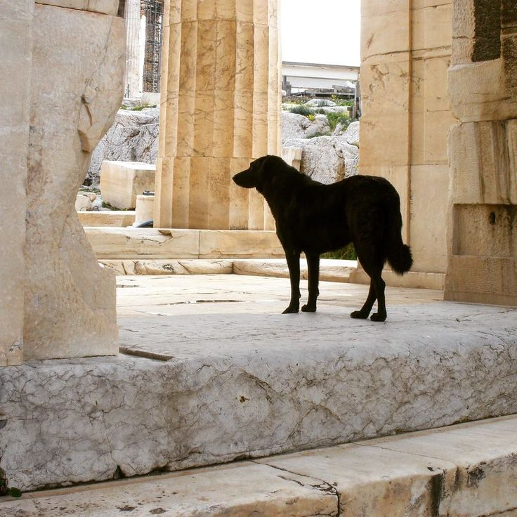 Stray dog exploring the Acropolis. #Athens #Greece #History #Art #Architecture #Beauty #Dogs #Writer #Travel #Wanderlust