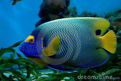 17 best images about poissons on pinterest photo for Poisson exotique aquarium