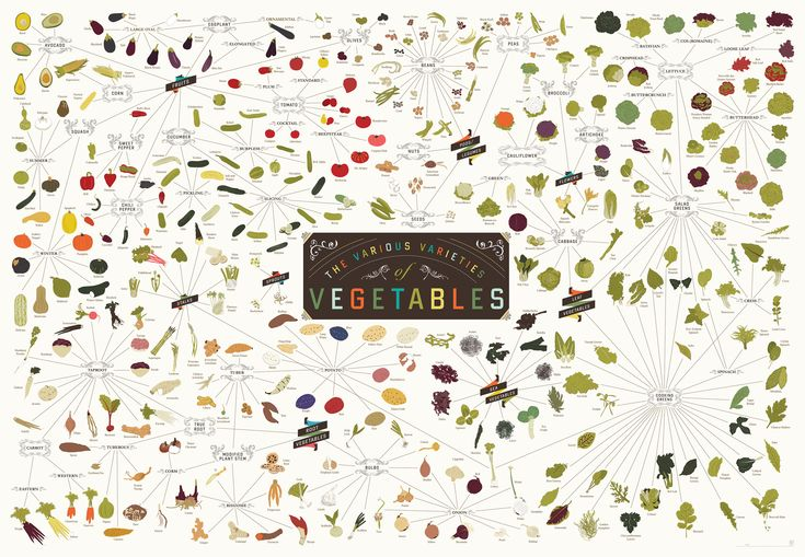 The Various Varieties of Vegetables by popchartlab: Over 400  crops, from Root Vegetables like Potatoes and the Prairie Turnip to lesser-known verified veggies like Courgette Flowers and the Ghostbuster Eggplant to the very many vegetables which are, botanically speaking, actually fruits.  #Infographic #Vegetables