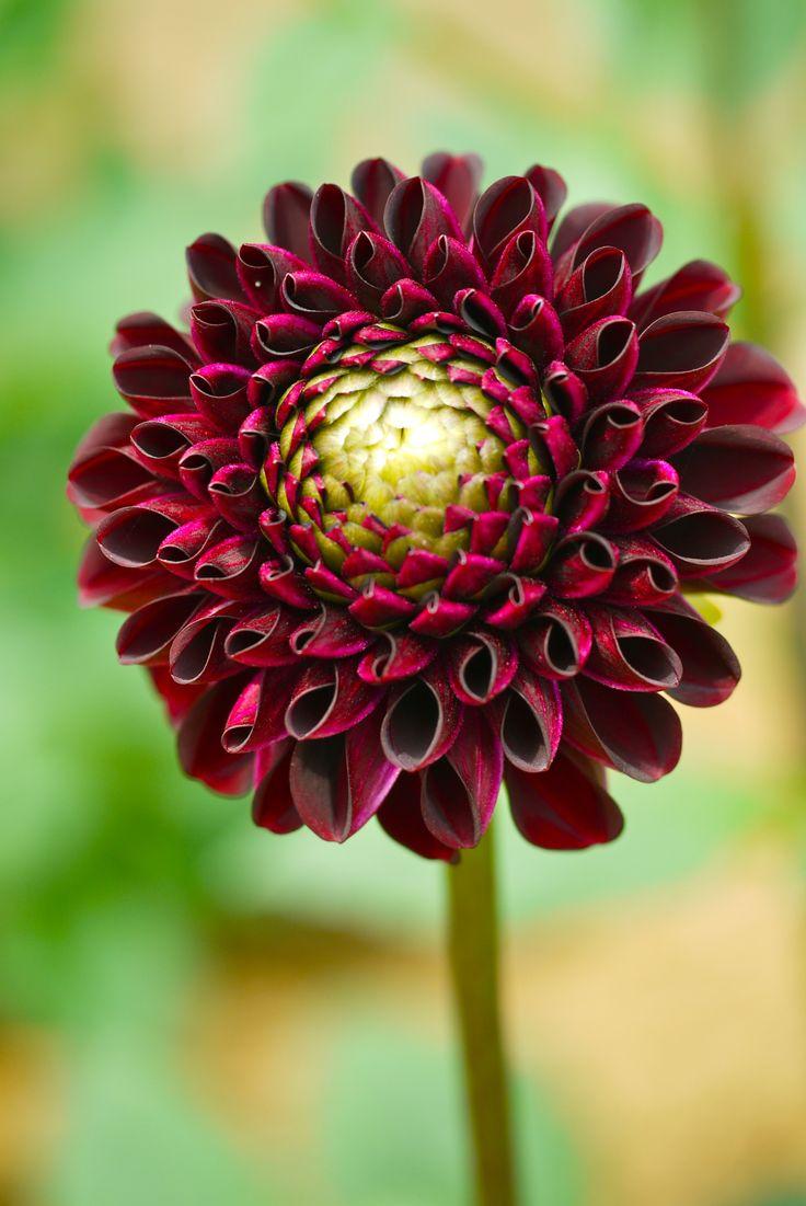 3356 best Fleurs images on Pinterest | Beautiful flowers, Exotic ...