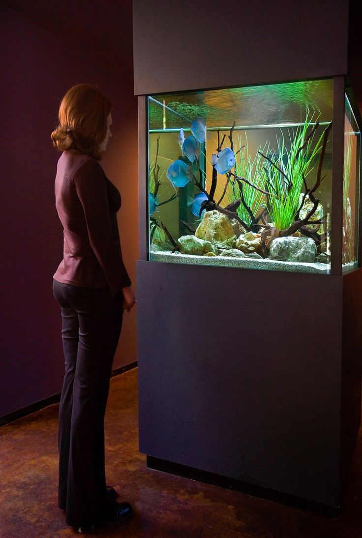 Fish Aquarium Rates In Delhi - Aquarium design group