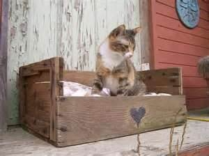 Pallet kitty bed